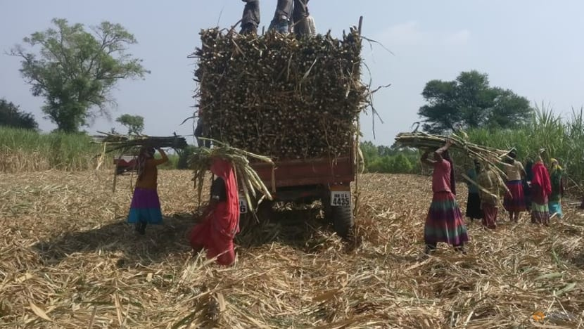Indian mills gear up to make raw sugar for export as global prices rally