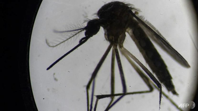Weekly dengue cases remain 'high'; total deaths this year rise to 7: NEA