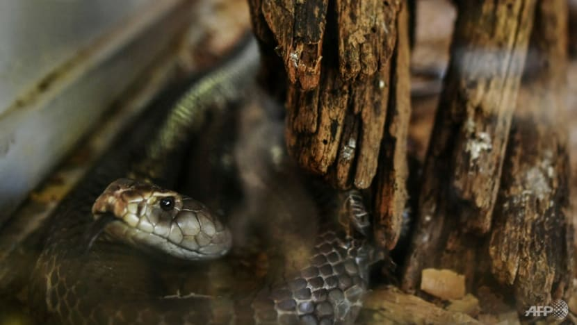 Man in India gets life sentence for using snakes to kill wife