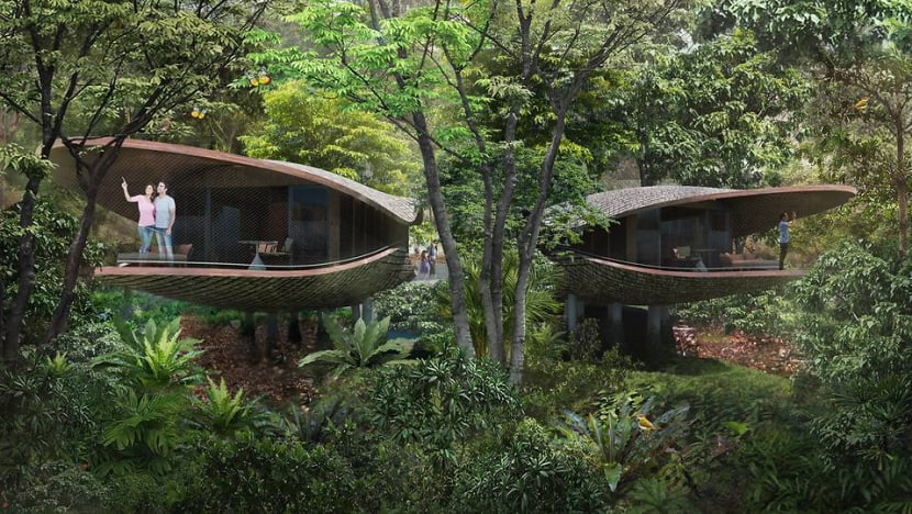 Rooms in new Mandai resort to include pod-shaped treehouses