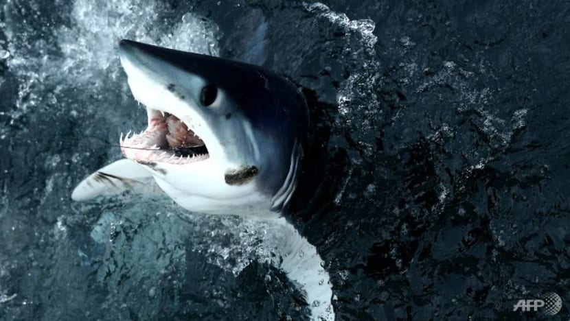 Many sharks closer to extinction than feared: Red List