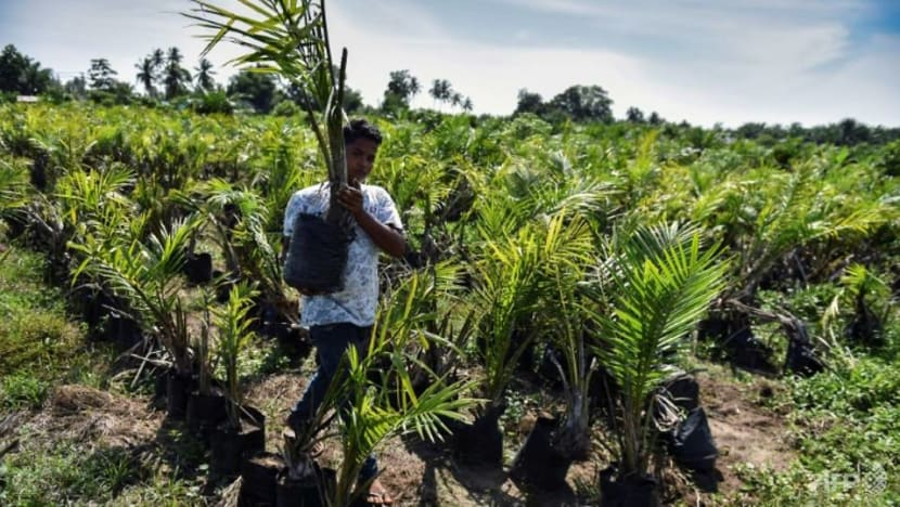Palm oil from conserved rainforest in Indonesia's Sumatra sold to major brands, says forest group