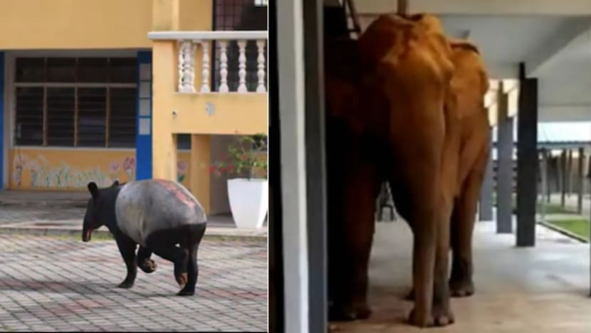 Commentary: Malaysians in lockdown coo over pictures of returning wildlife – but there's more than meets the eye