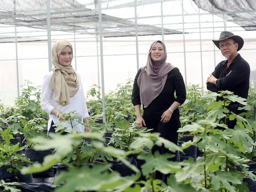 Meet the family of architects growing figs in the Selangor suburbs