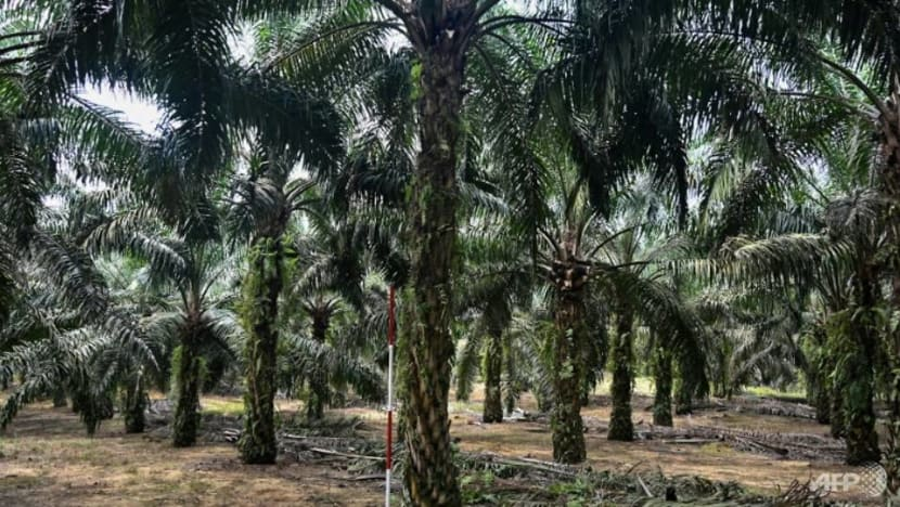 Malaysia to file WTO complaint on EU's palm oil curb by November