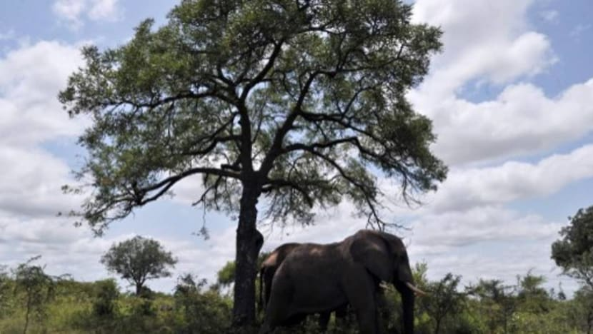Suspected rhino poacher killed by elephant, 'devoured' by lions: South African authorities