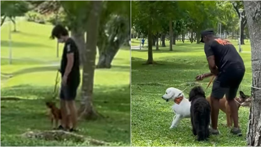 AVS looking into alleged mishandling of dogs by animal trainers in online video