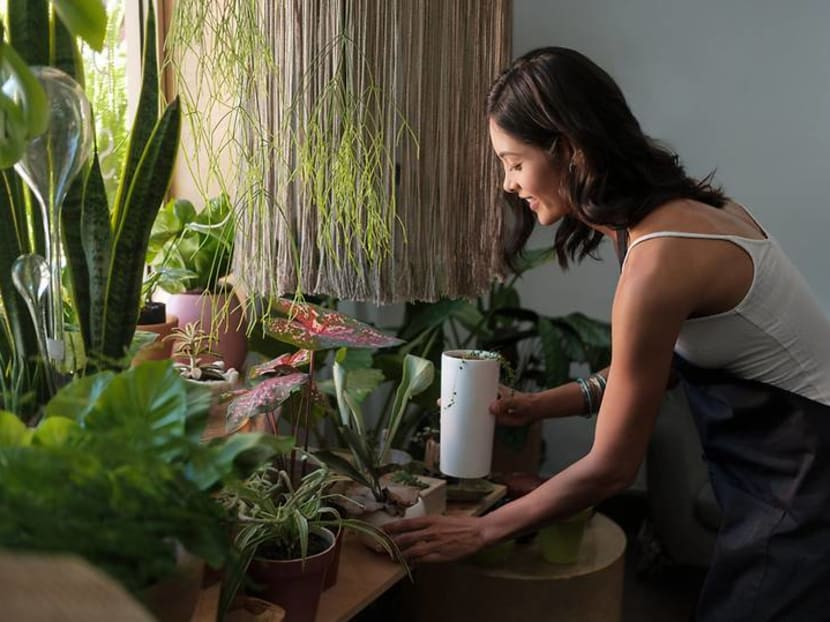 S$40,000 for a single plant? How much Singaporeans are splurging on their hobby