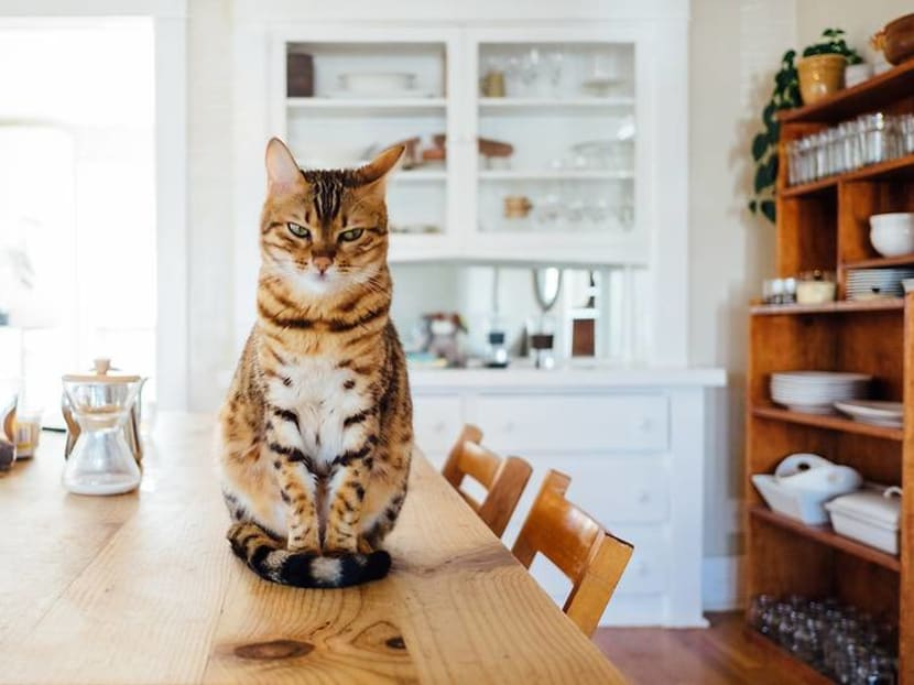 Looking to rent a place with your cat? Make sure you follow these steps