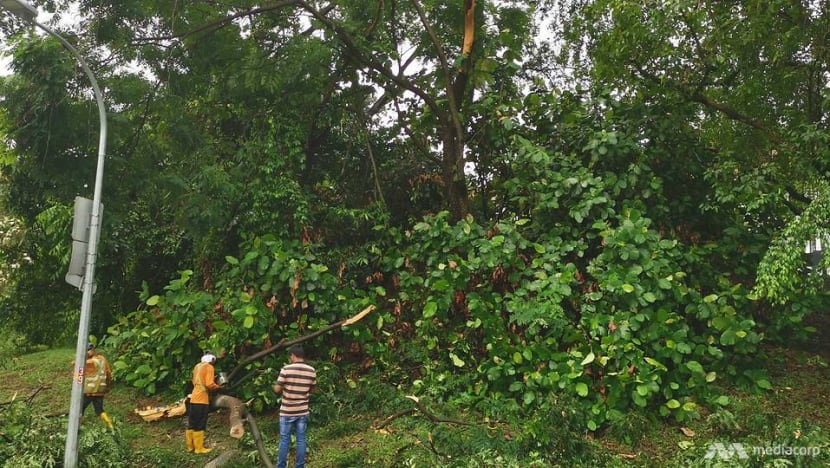 Several trees across Singapore fall amid widespread thunderstorm