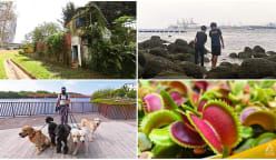 Up Your Alley: Punggol's gleaming waterfront living steeped in rustic charm