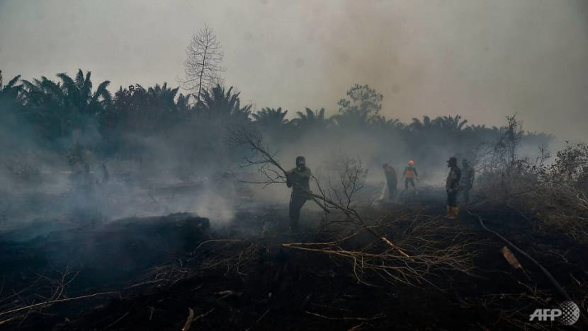 Indonesia government considering harsher punishments for forest burners