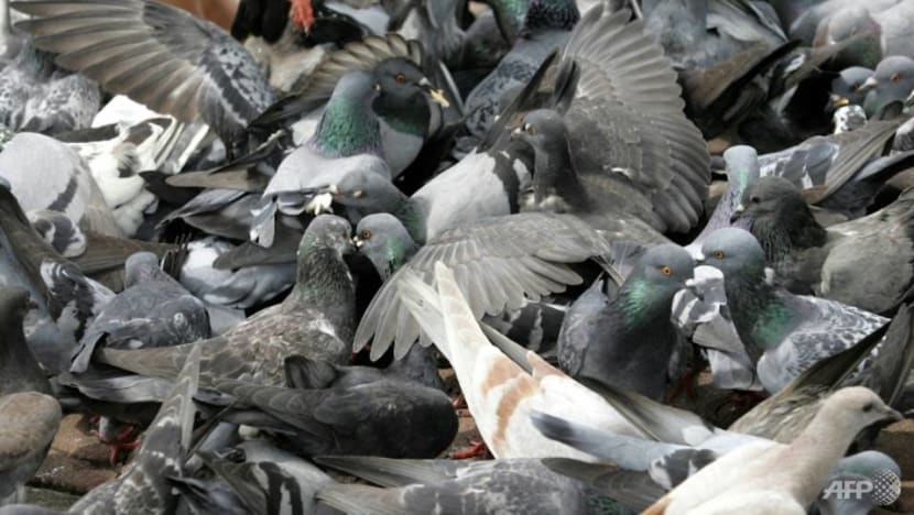 Johor investigating link between bird droppings and recent health issues at some Pasir Gudang schools