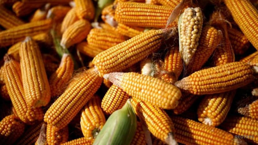 Double whammy for food buyers as freight costs spike amid high grain prices