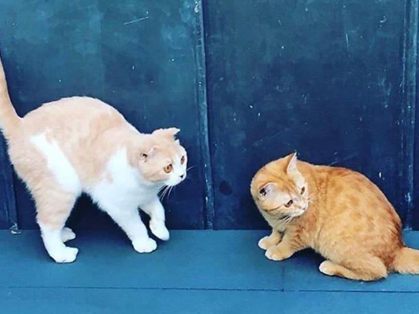 Ed Sheeran's cats take to Instagram