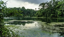 Singapore: Preserving biodiversity in the tropical city-state