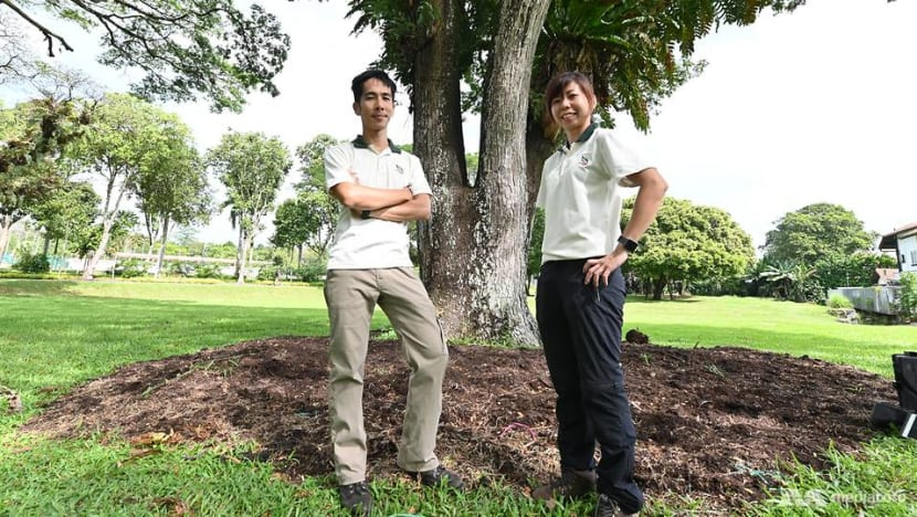 Listening to trees to care for them better: The work of an NParks arborist