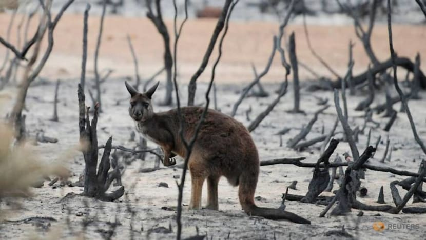 Australia's state of New South Wales to make landowners clear fire hazards