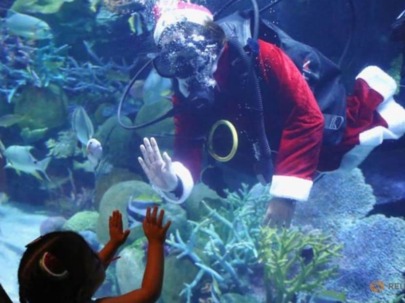 Happy Fishmas - Thai aquarium gets surprise Santa visit