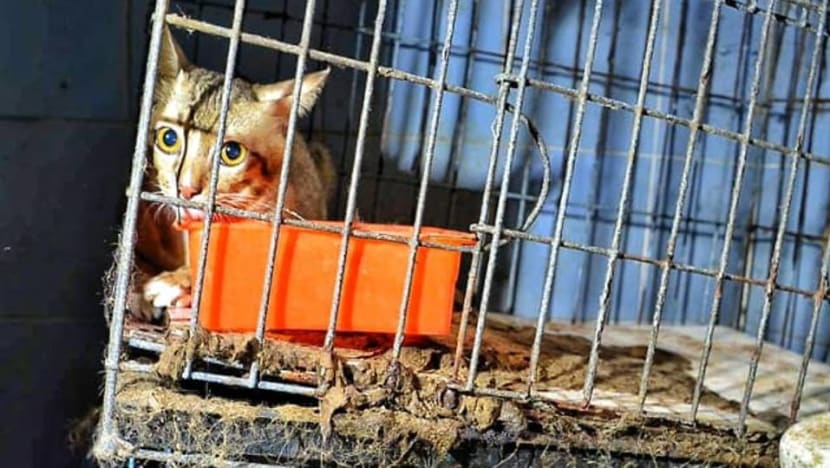 At least 120 cats rescued from 'hellish jail' outside Bangkok