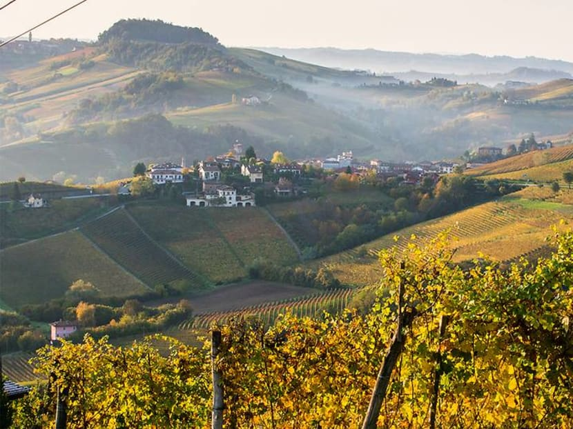 Why the Italian wine region of Barolo should be on your travel bucket list