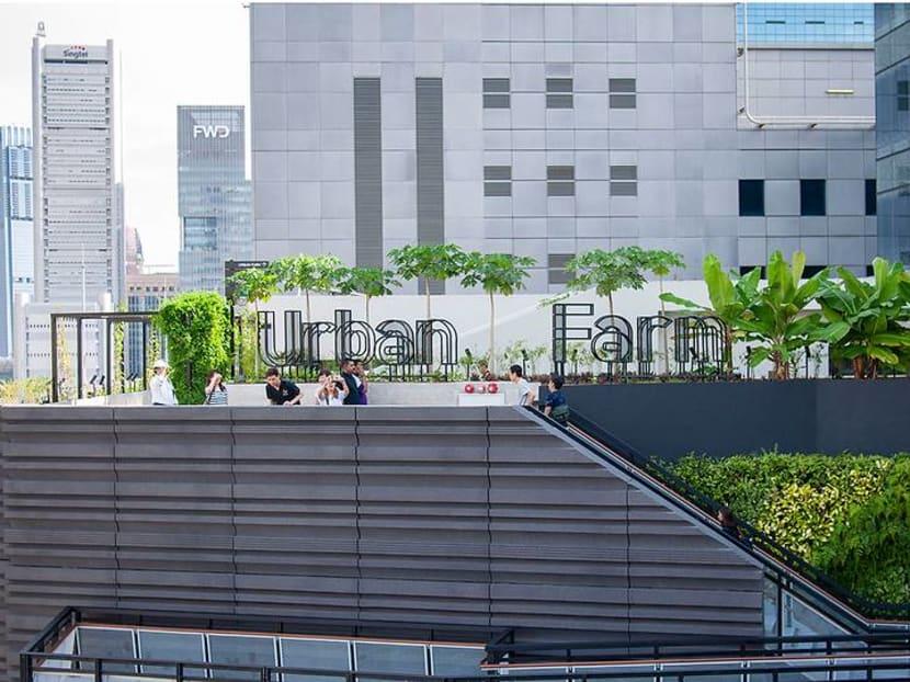 Raising the roof: Cultivating Singapore's urban farming scene