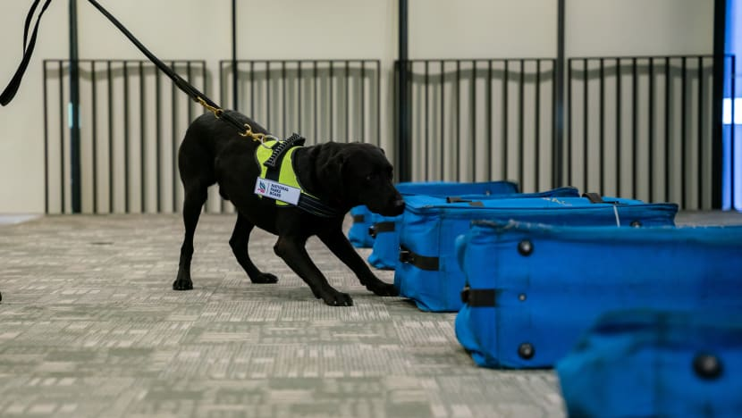 New Singapore wildlife forensics centre to help tackle illegal trade as NParks launches K9 unit