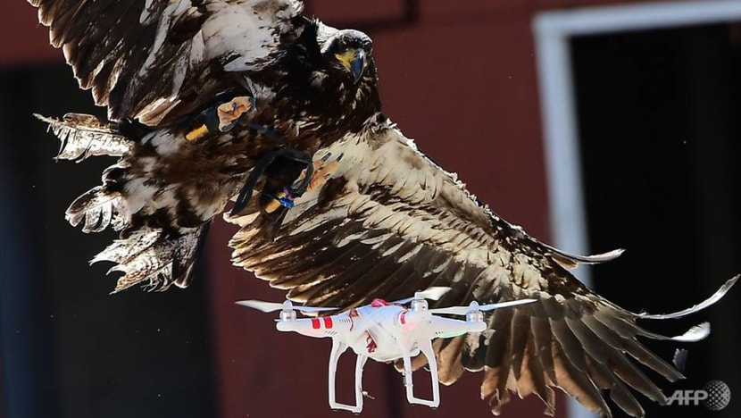 Eagles, lasers and nets: Options for dealing with rogue drone flights