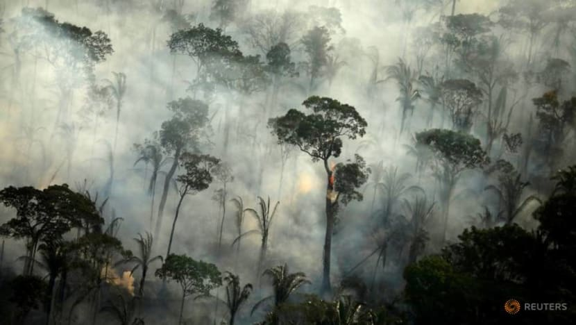 Explainer: Why forests matter as carbon sinks and what we can do to protect them
