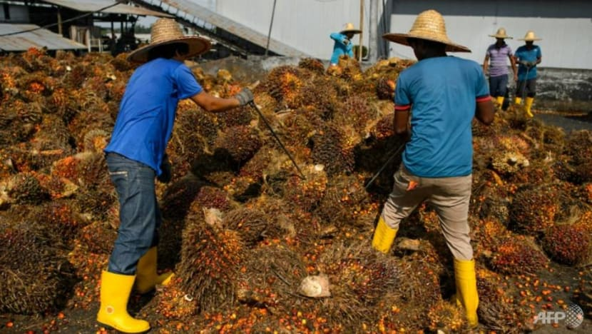 COVID-19 pandemic forces Malaysian palm industry to rethink reliance on foreign labour