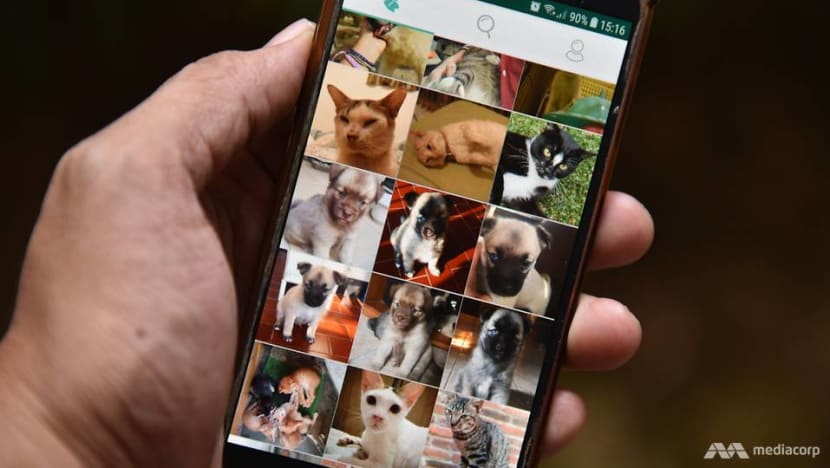 App plays matchmaker in Indonesia between abandoned animals and adopters