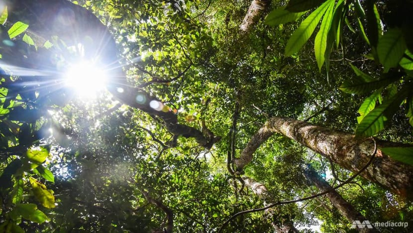 The community guardians in Indonesia rejecting profits to preserve natural treasures