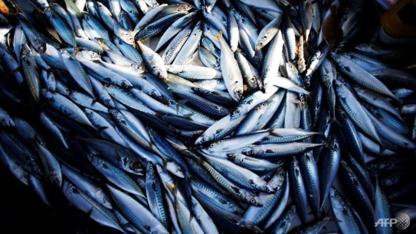 Malaysia to prohibit some fish and shrimp exports from Jan 1 to Feb 28 to ensure supplies