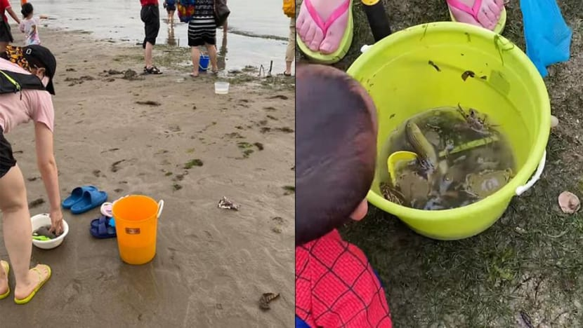 Singapore marine life enthusiasts 'horrified' over beach goers digging up sea creatures
