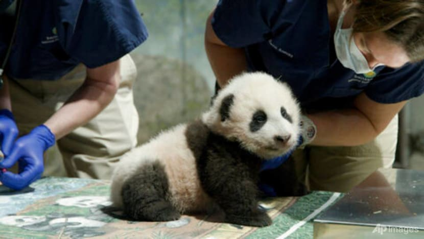 US, China extend giant panda deal by three years