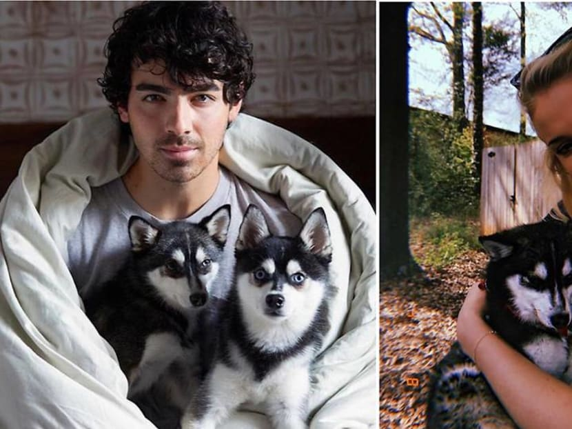 Sophie Turner and Joe Jonas lose their dog in a tragic accident