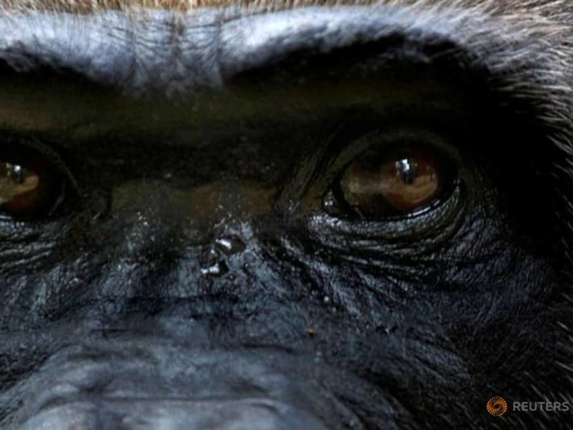 Cameroon cancels logging plan that threatened rare apes