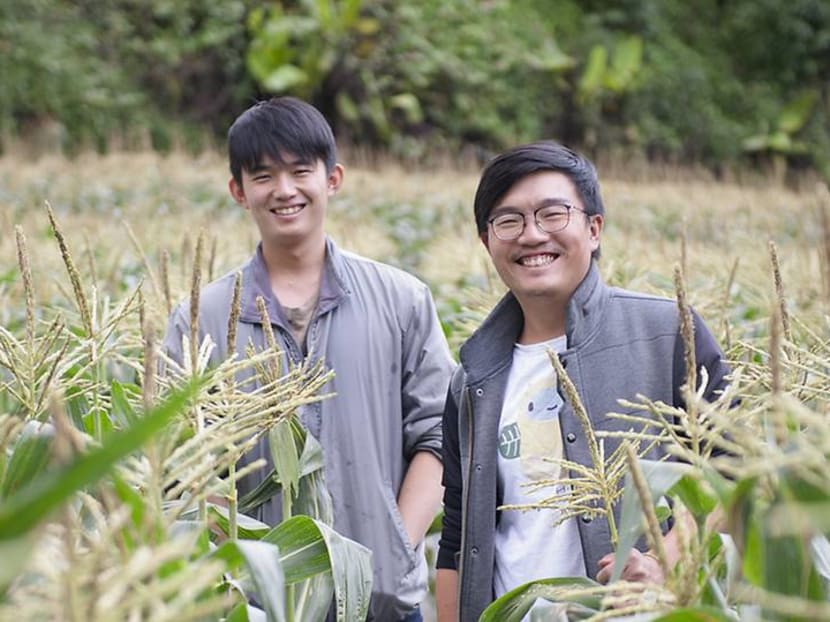 The Cameron Highlands farmers supplying ethical, organic produce to Singapore