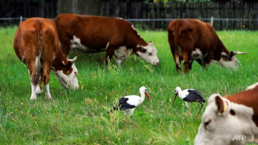 EU states destroy suspect Polish beef as scare spreads
