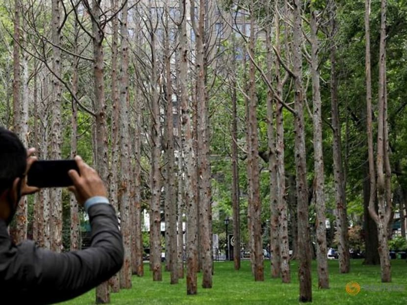 In New York, artist Maya Lin's 'Ghost Forest' warns on rising sea water