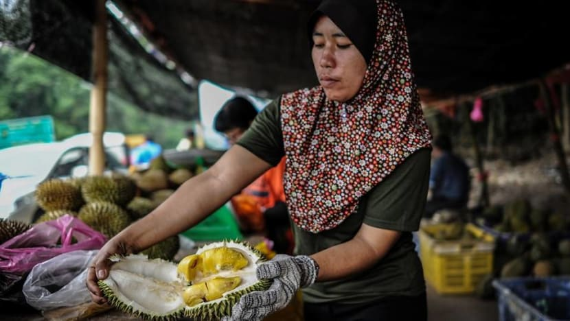 Malaysia's booming durian industry sees new investors, management methods