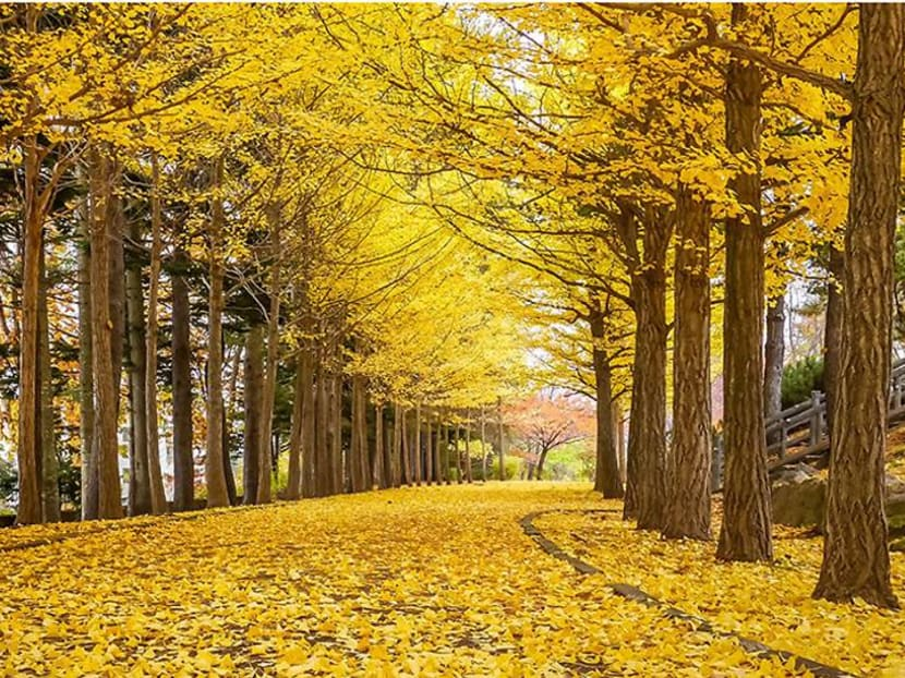The five best places to see autumn leaves in and around Tokyo, Japan