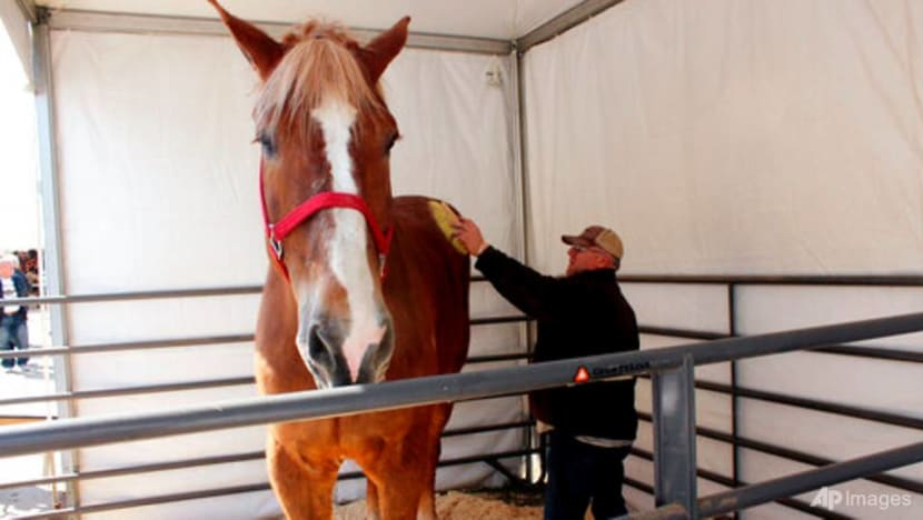 World's tallest horse, Big Jake, dies in Wisconsin at age 20