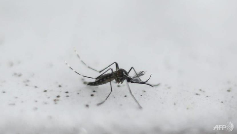 4 more die of dengue, 9 deaths in total in 2019: MOH, NEA