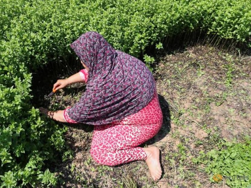 From farm to face, Gaza women create cosmetics from local herbs