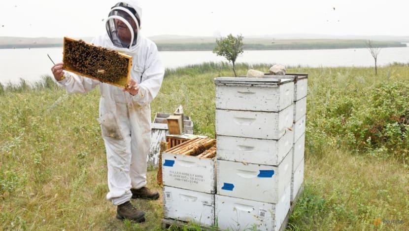 Stung by climate change: Drought-weakened bee colonies shrink US honey crop, threaten almonds