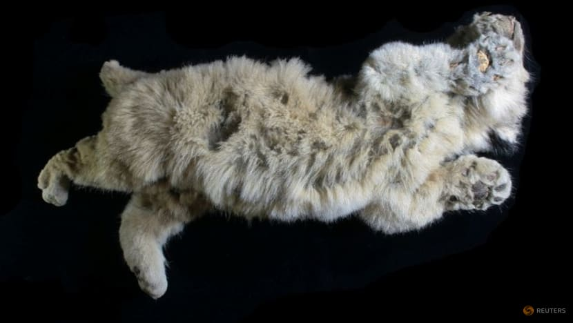 Cave lion cub found in Siberian permafrost is 28,000 years old