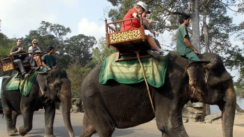 Cambodia to ban elephant rides at Angkor temples