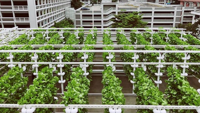 Growing food in the heartlands: SFA launches tender for rooftop farming sites at HDB car parks