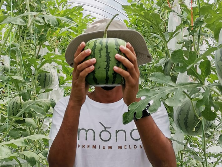 Why Malaysia's muskmelon 'agropreneurs' are now growing square watermelons